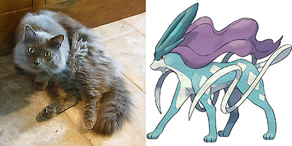 Ashford and Suicune